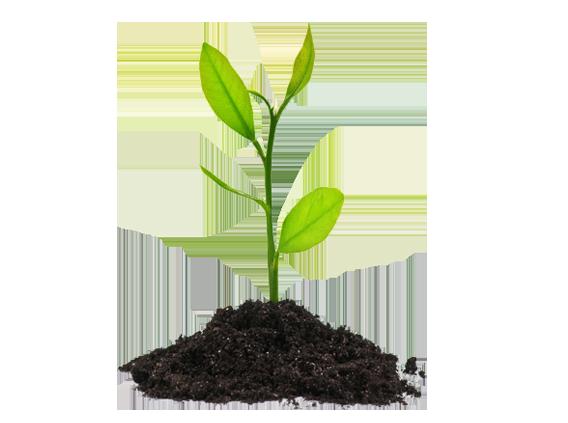 plants-png-44926